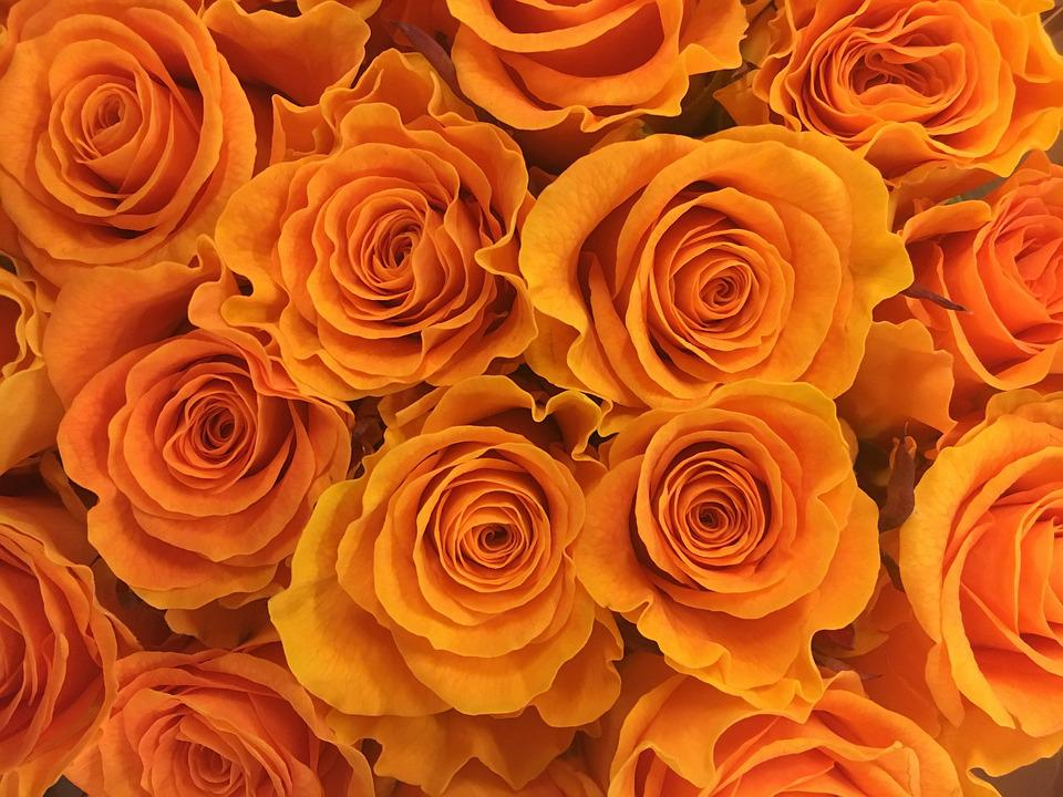 Rose, Flower, Flowers, Gold, Orange