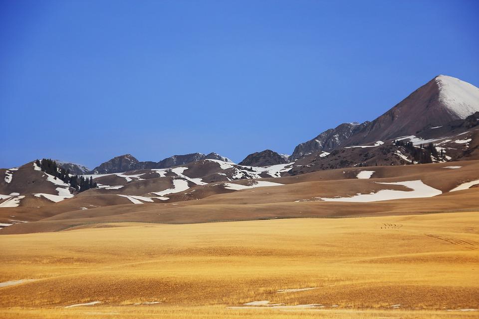 In Xinjiang, Prairie, Snow Mountain, Autumn, Gold
