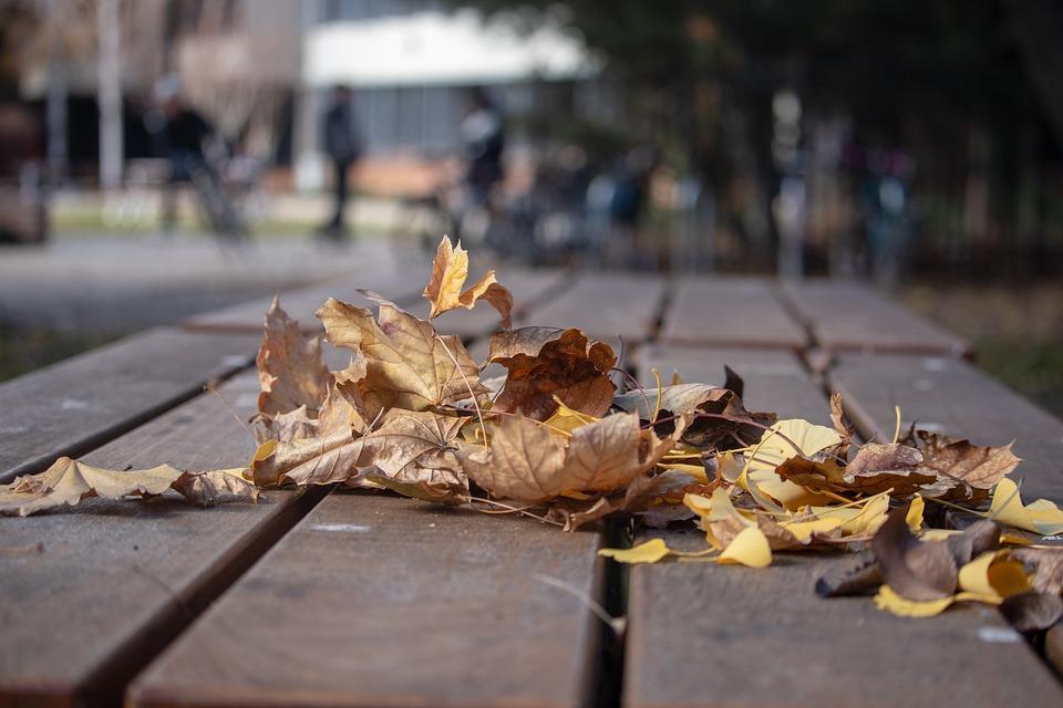 Leaves, Fall, Autumn, Season, Yellow, Nature, Gold
