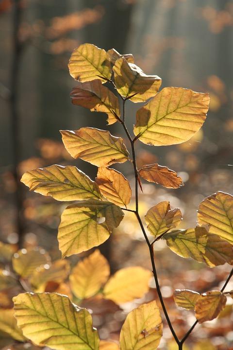 Autumn, Forest, Leaves, Golden, Golden Autumn
