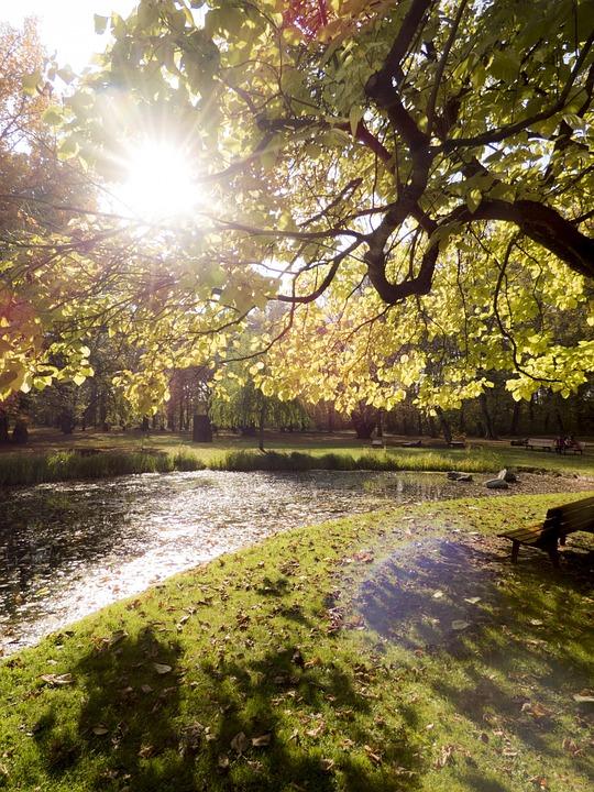 Autumn, Mood, Leaves, Golden Autumn, Tree, Pond