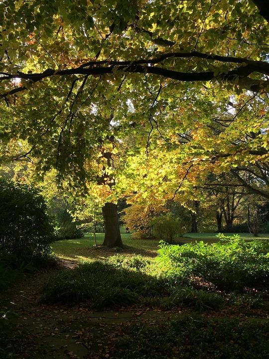 Autumn, Trees, Leaves, Golden Autumn, Mood, Light, Sun