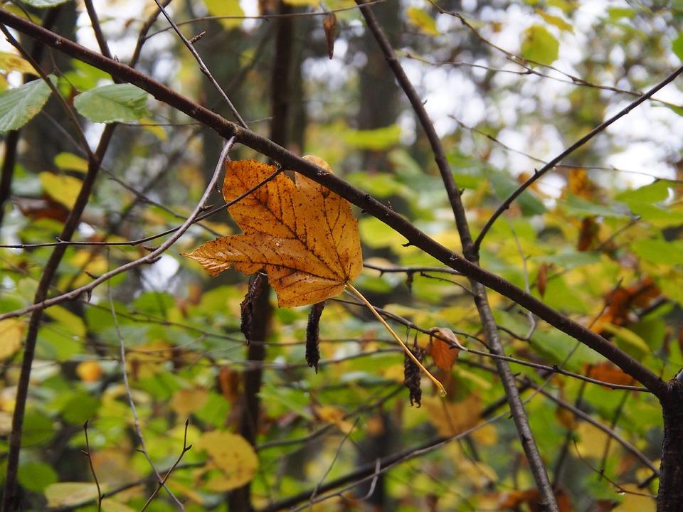 Leaves, Autumn, Fall Foliage, Golden Autumn