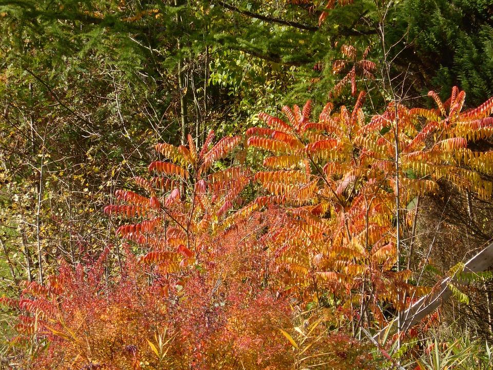 Autumn, Golden Autumn, Fall Foliage, Leaves