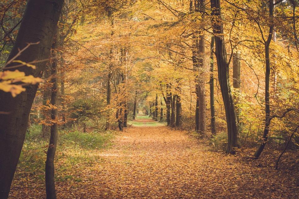 Autumn, Forest, Leaves, Forest Floor, Golden Autumn