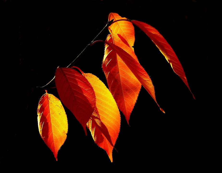 Leaves, Autumn, Fall Foliage, Golden Autumn, October
