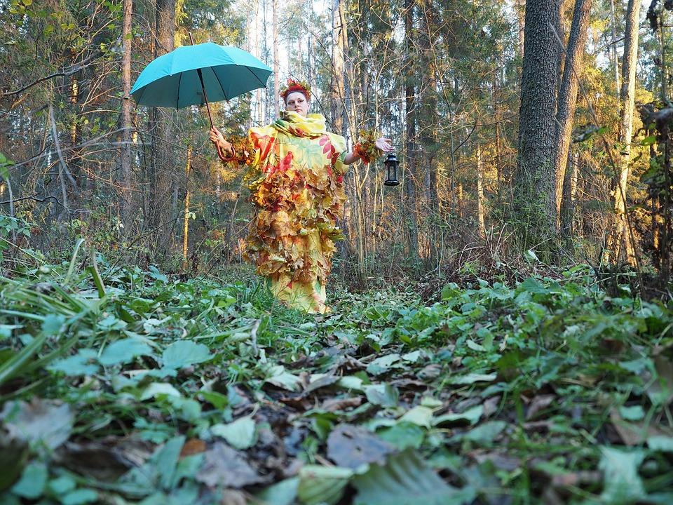 Autumn, Forest, Nature, Autumn Forest, Golden Autumn