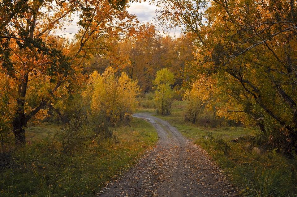 Autumn, Road, Forest, Trees, Nature, Landscape, Golden