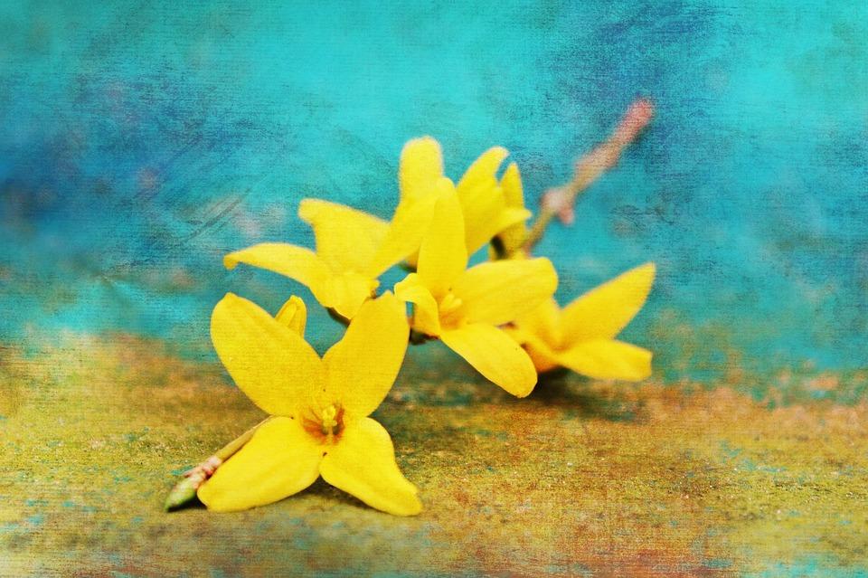 Gold Shrub, Easter Bush, Golden Bells, Stangeblueter