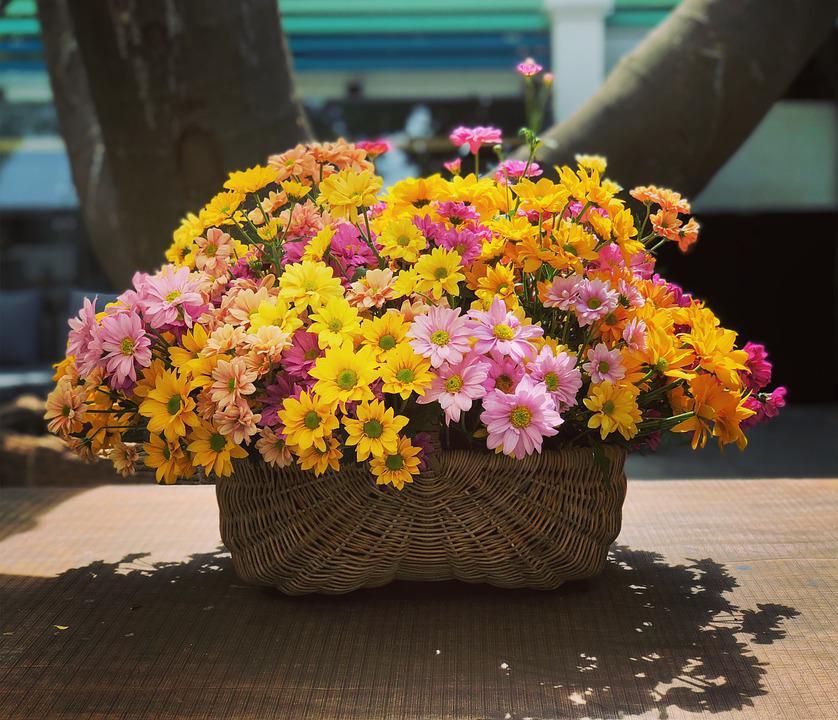 Daisy, Golden Daisy, Golden, Flower, Plant, Botanical