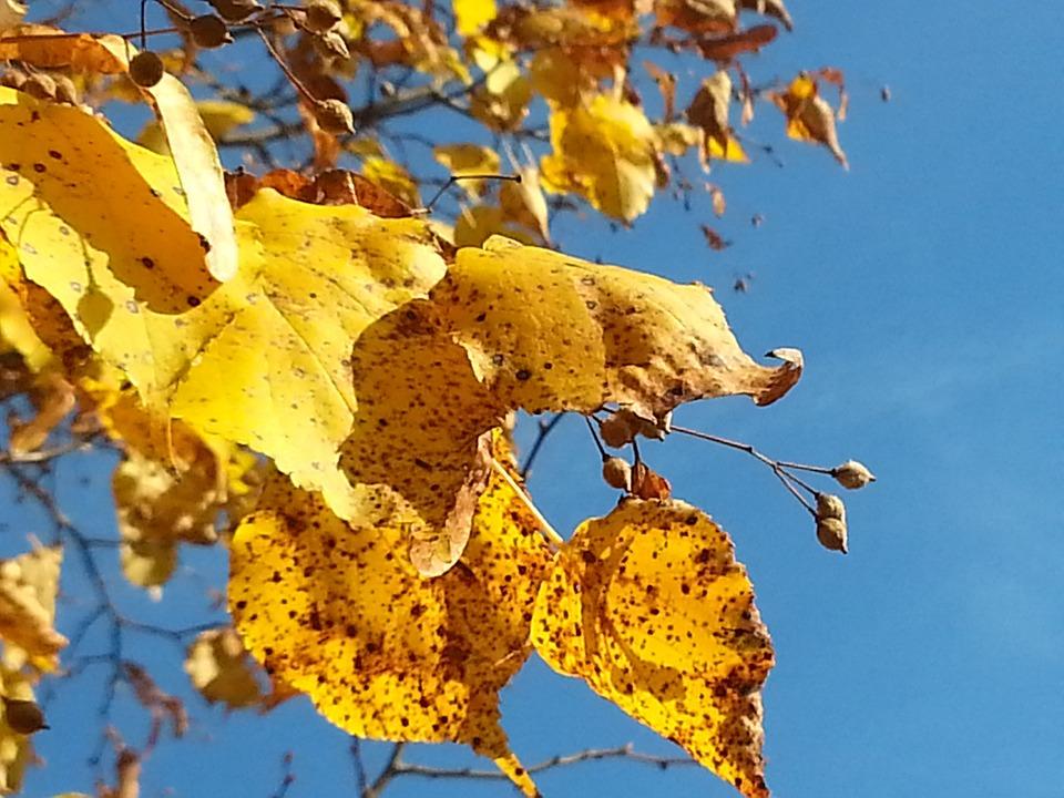 Golden, Golden October, Azure, Golden Leaves