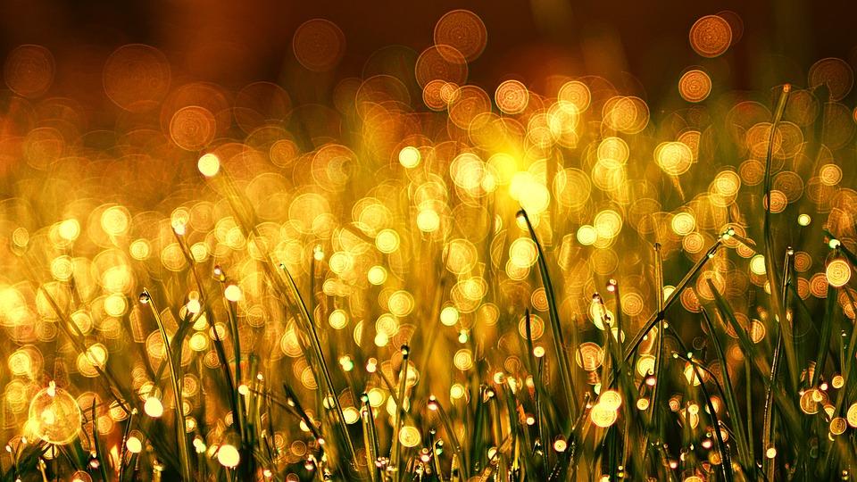 Grass, Meadow, Golden, Dew, Dewdrop, Bokeh, Kringel