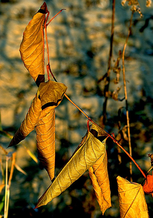 Foliage, Dry Leaves, Autumn, Golden Leaves