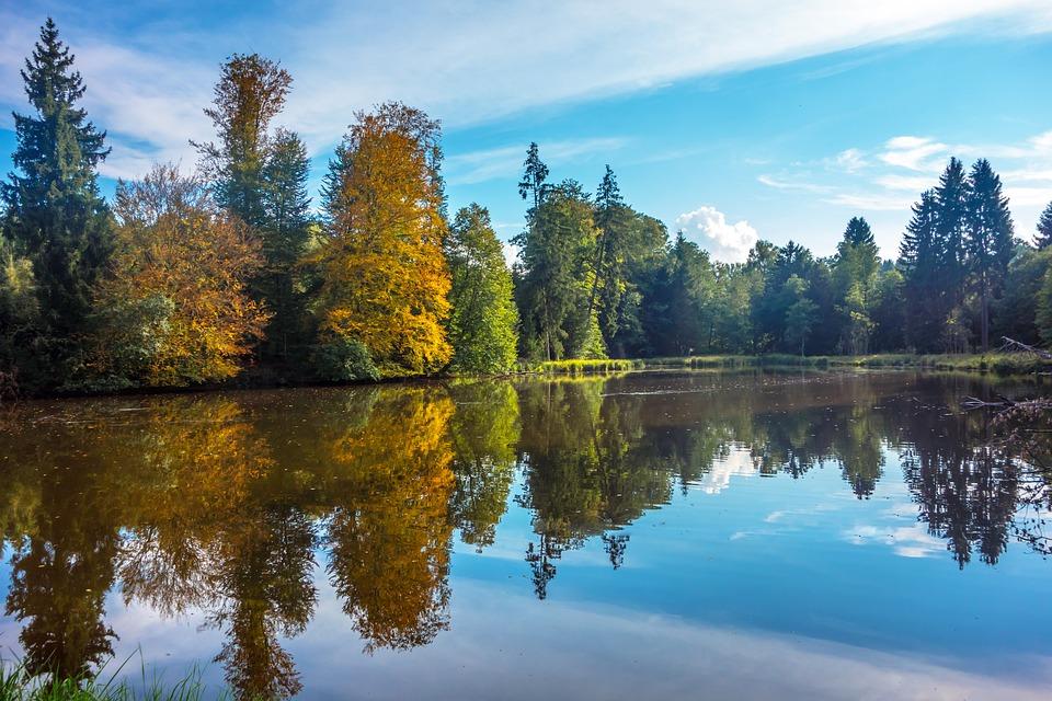 Forest, Autumn, Golden, Lake, Pond, Light, Nature