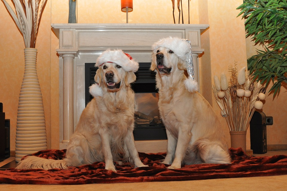 Golden Retriever, Santa Hat, Dogs, Christmas Card