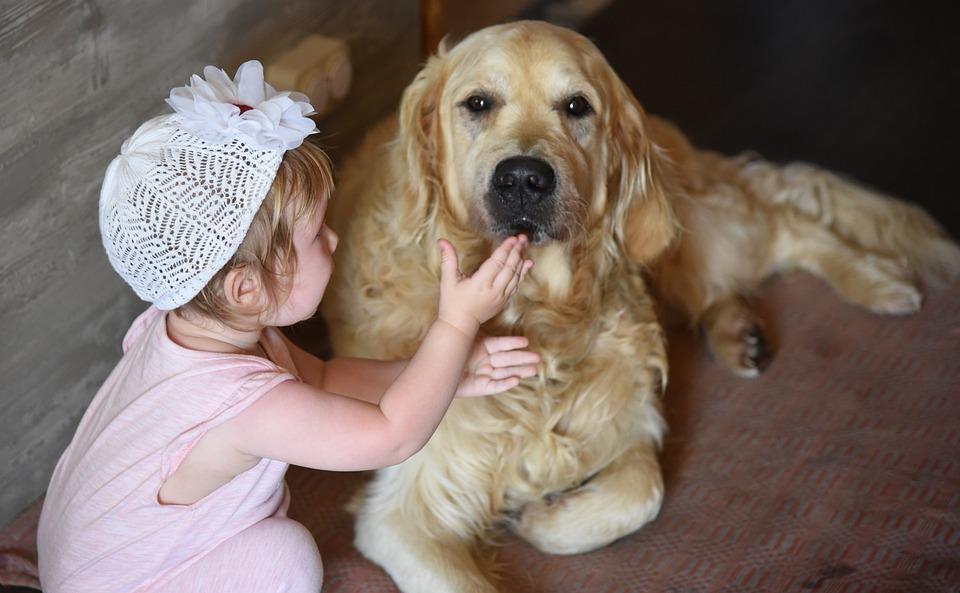 Dog, Girl, Retriever, Golden, Friendship, Home, Cute