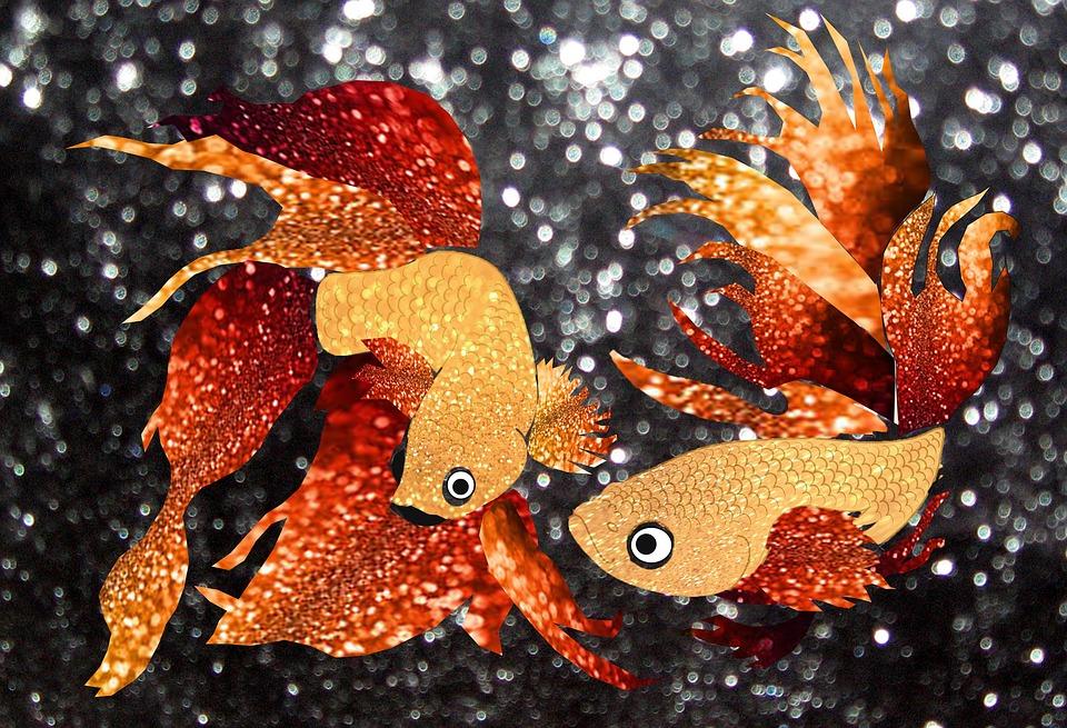 Glitter Goldfish, Glitter, Goldfish