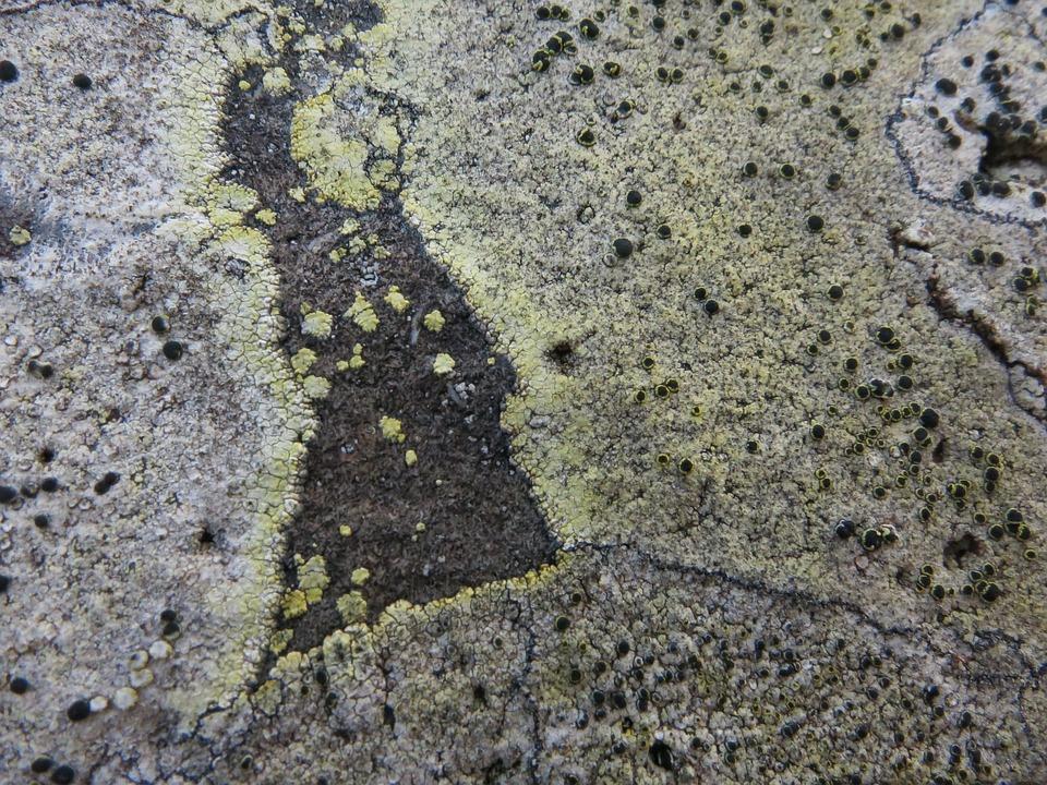 Stone, Weave, Gomera, Structure