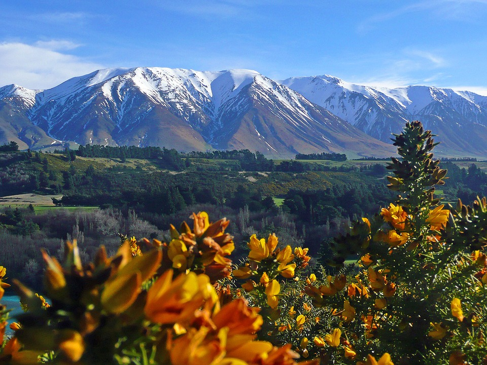 New Zealand, Mountains, Gorse, Yellow, Landscape