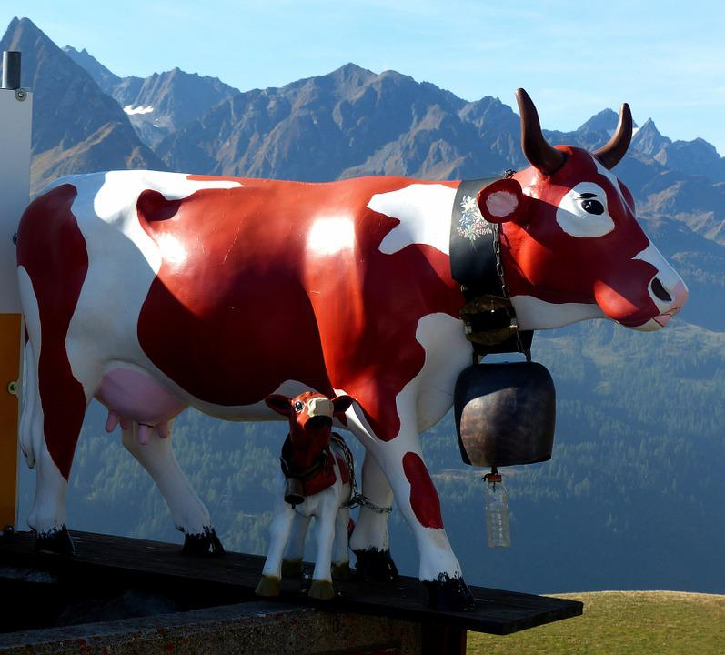 Switzerland, Gotthard-pass, Cow, Milk Cow, Artificial