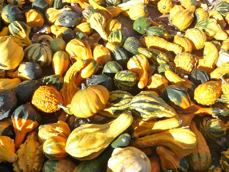 Gourd, Pumpkin, Fall, Autumn, Food, Harvest, Halloween