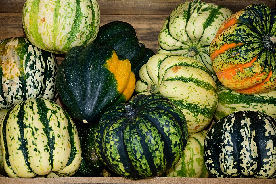 Pumpkins, Gourd, Decoration, Thanksgiving
