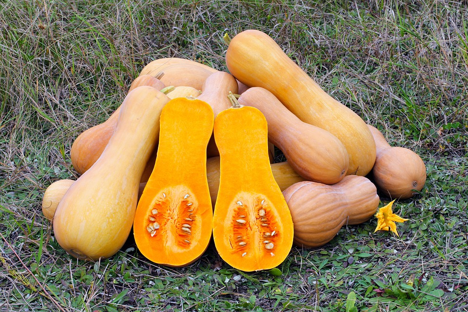 Butternut Squash, Produce, Gourd, Vegetable, Food