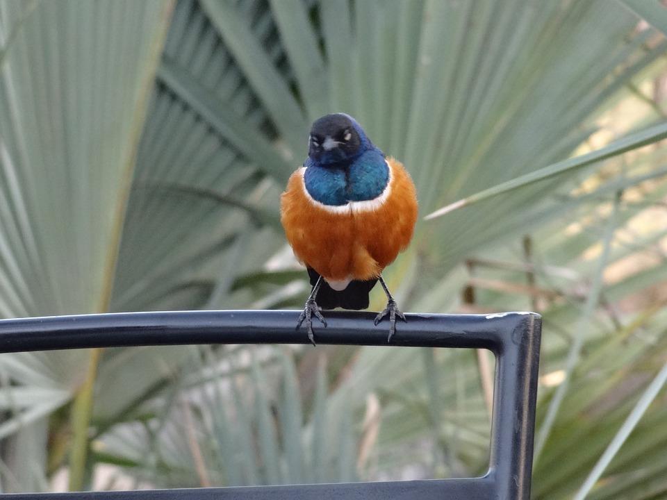 Bird, Exotic, Gourmand