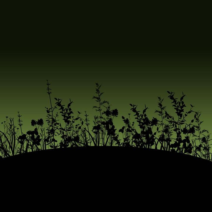 Flower, Silhouette, Dusk, Dawn, Gradient, Nature, Mod