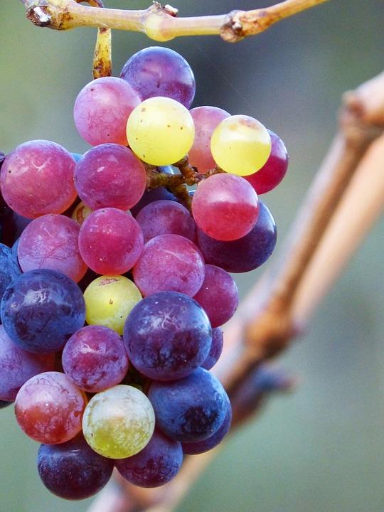 Grape, Grain, Colors, Maturation