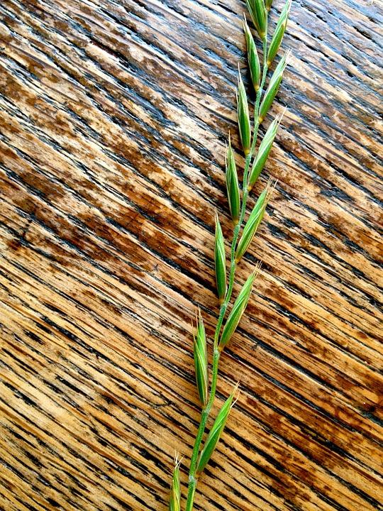 Grain, Art, Food, Green