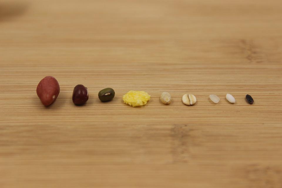 Grain, Rice, Beans