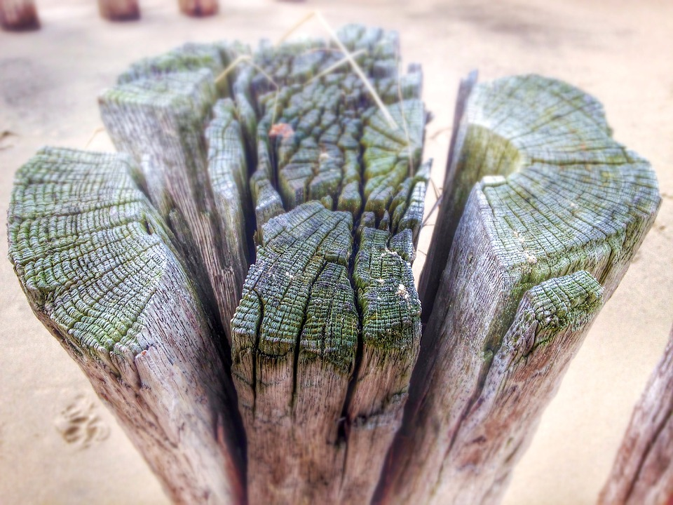 Wood Pile, Beach, Wood, Structure, Wound, Cracks, Grain