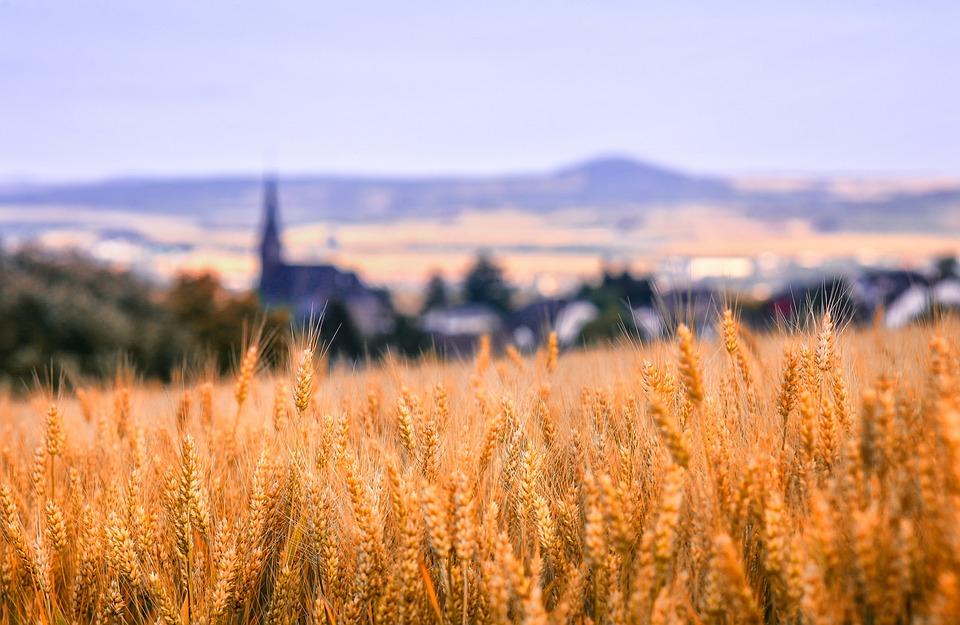 Landscape, Nature, Cornfield, Grain, Village, Church