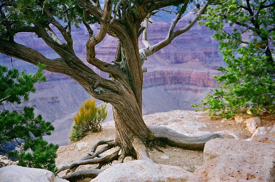 Grand Canyon, Canyon, Valley, Cliff, Gorge, Rocks