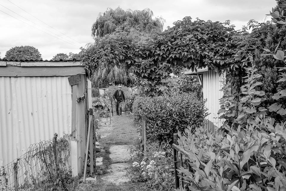 Grandfather, Garden, Garden-worker, Gardener, Earth