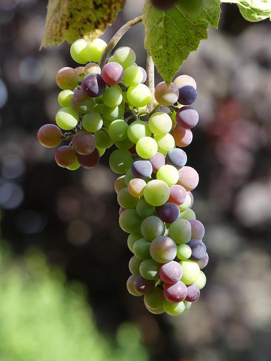 Wine, Grape, Fruit, Give, Grapes