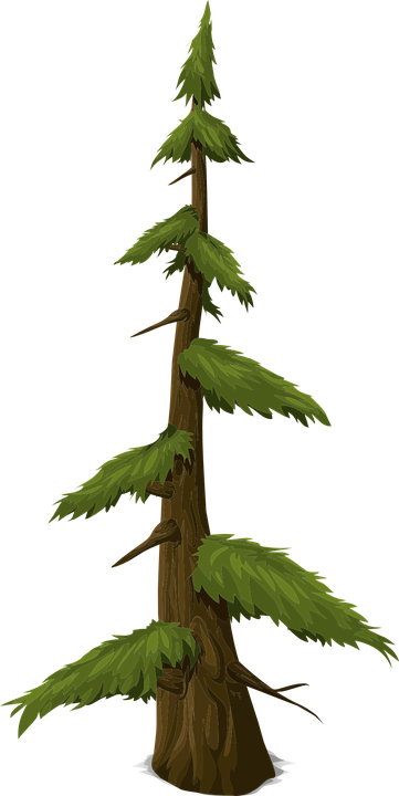 Fir, Tree, Trunk, Nature, Leaves, Branches, Graphic