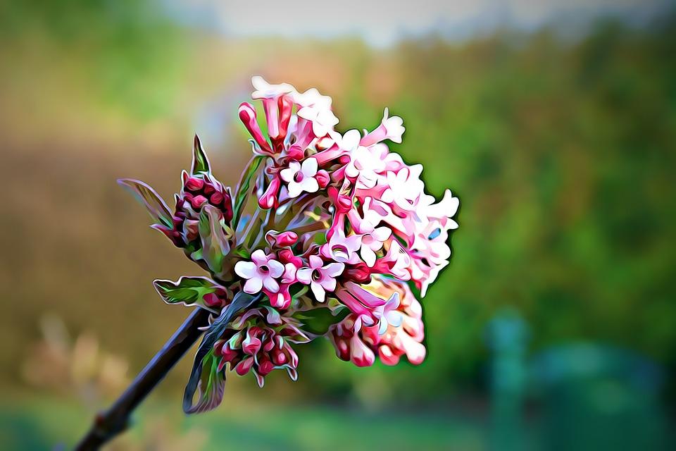 Digital, Graphics, Flower, Plant, Nature, Flowers