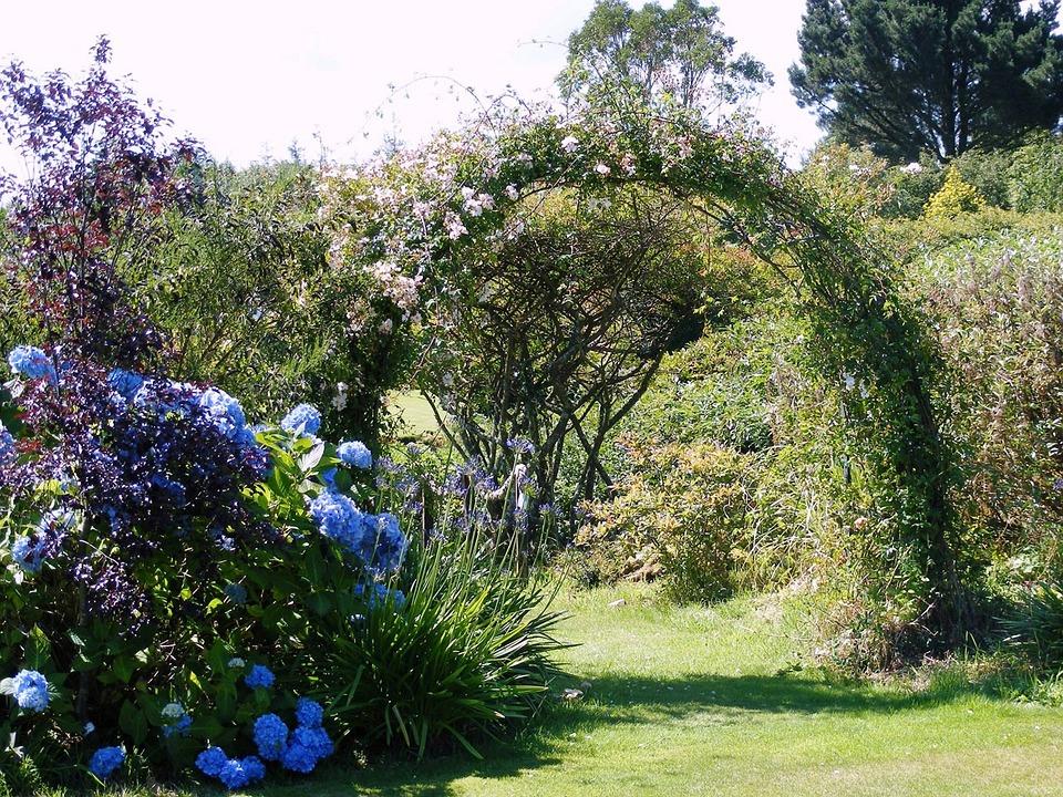 Hydrangea, Arch, Roses, Grass, Sunshine, Greenery