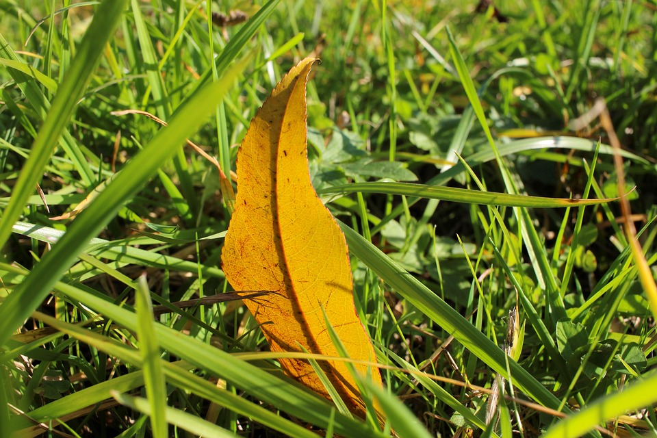 Grass, Meadow, Leaf, Leaves, Autumn, Nature, Botany