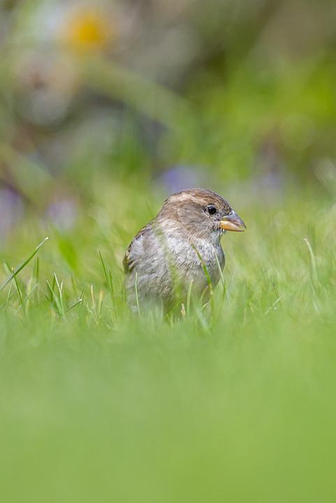 Bird, Grass, Beak, Feathers, Plumage, Ave, Avian