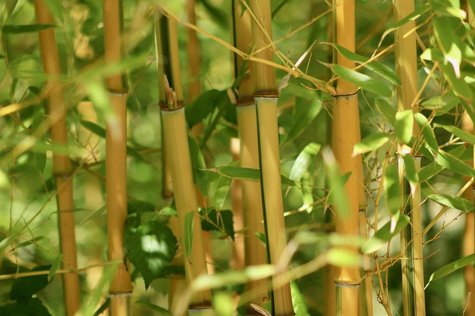 Bamboo, Grass, Bamboo Greenhouse, Bamboo Stalks