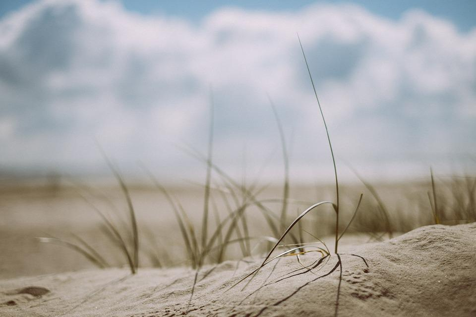 Beach, Grass, Outdoors, Sand, Sea, Seashore