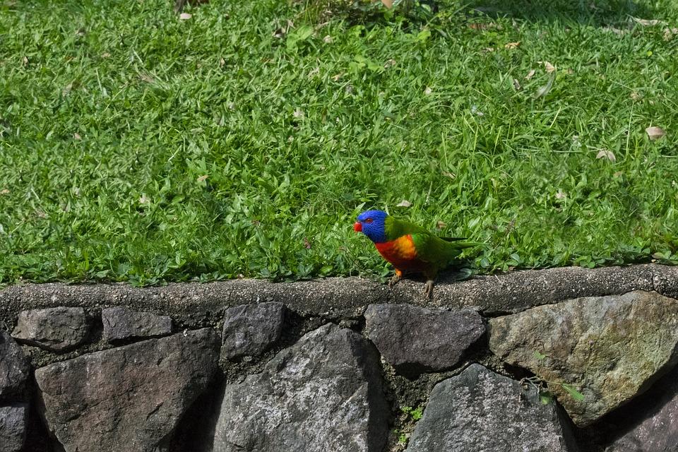 Nature, Outdoors, Summer, Grass, Bird, Color, Beautiful