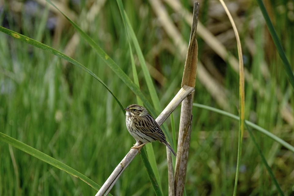 Nature, Wildlife, Outdoors, Grass, Little, Animal, Bird