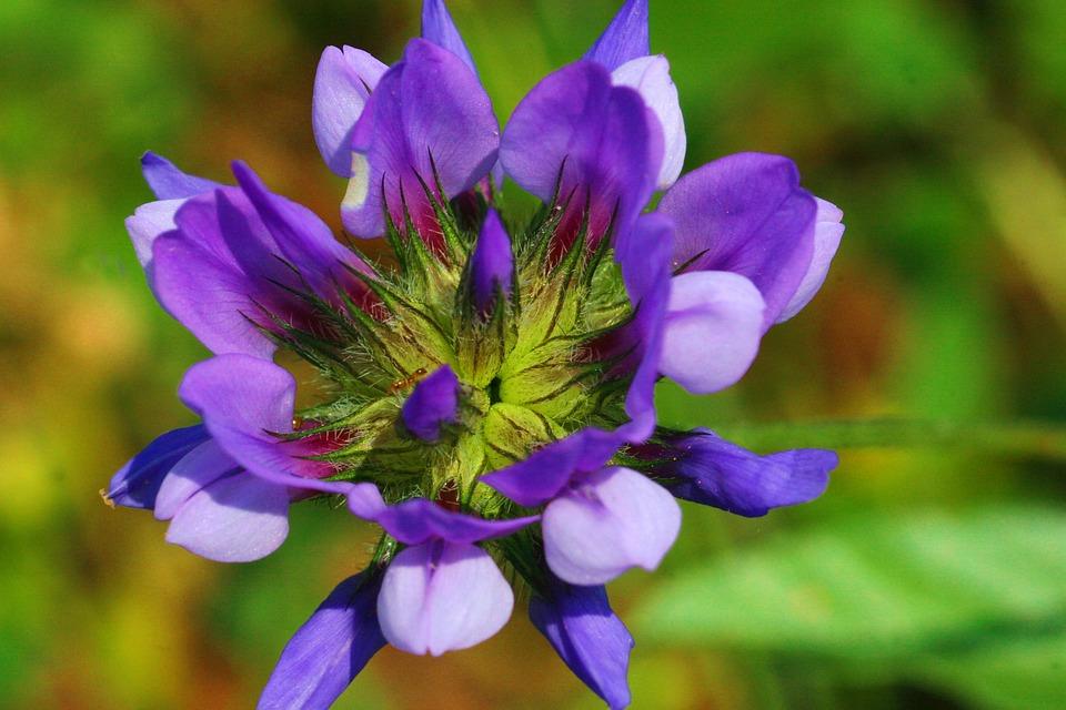 Grass Bitumen, Flower, Nature