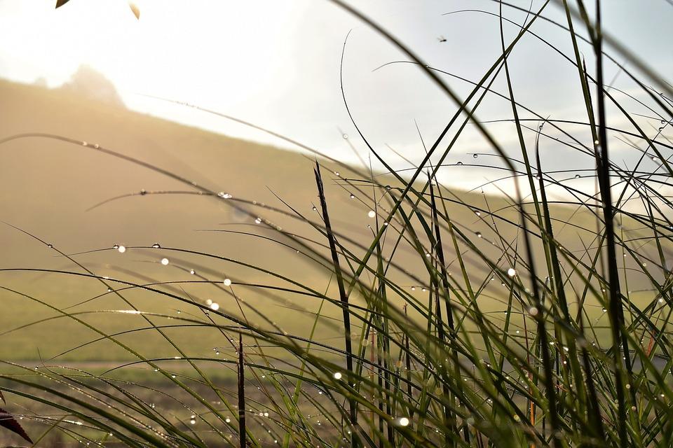 Grass, Landscape, Meadow, Green, Nature, Blade Of Grass
