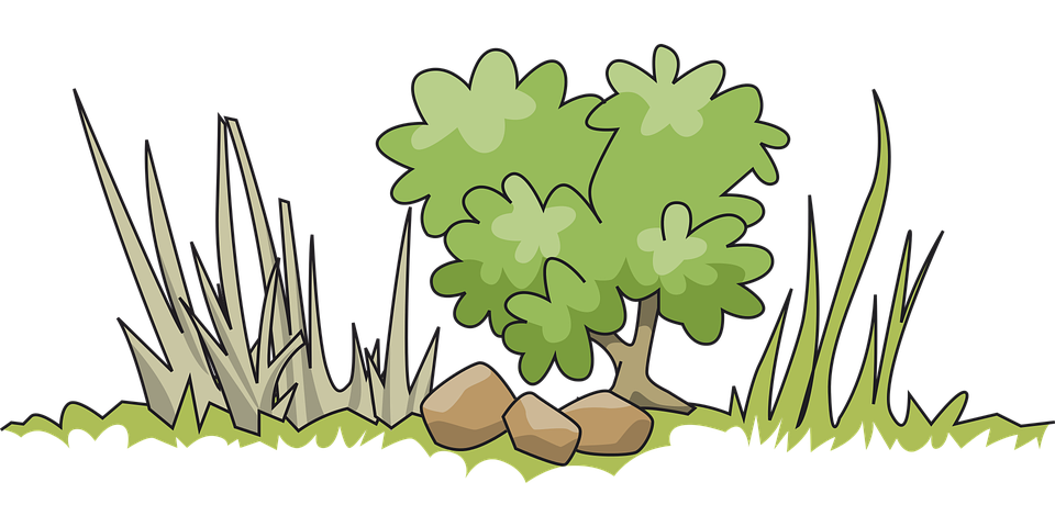 Border, Bush, Garden, Grass, Green, Nature, Tree
