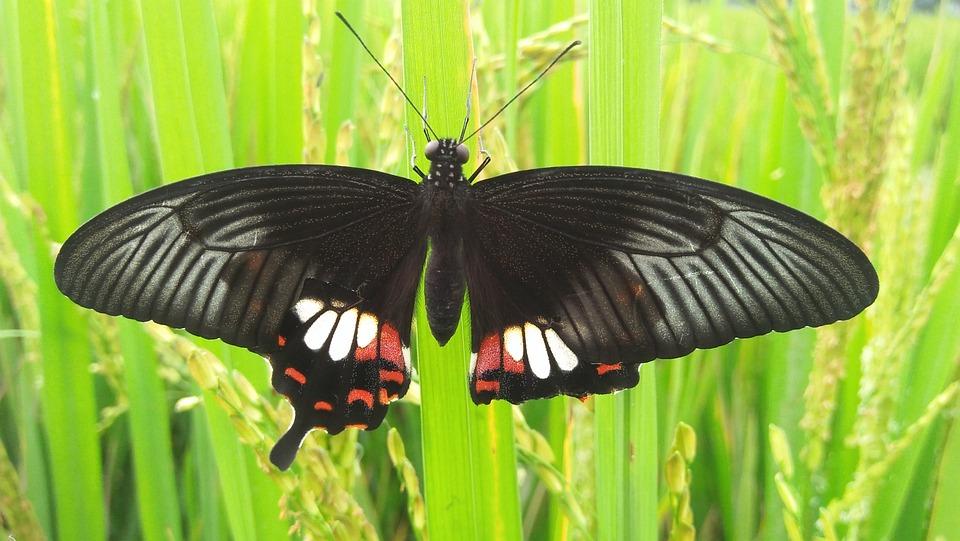 Butterfly, Tree, Grass, Green